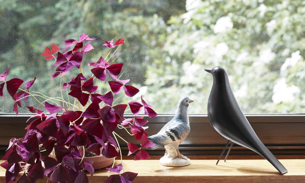vitrahousebird